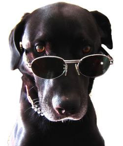 black 20dog