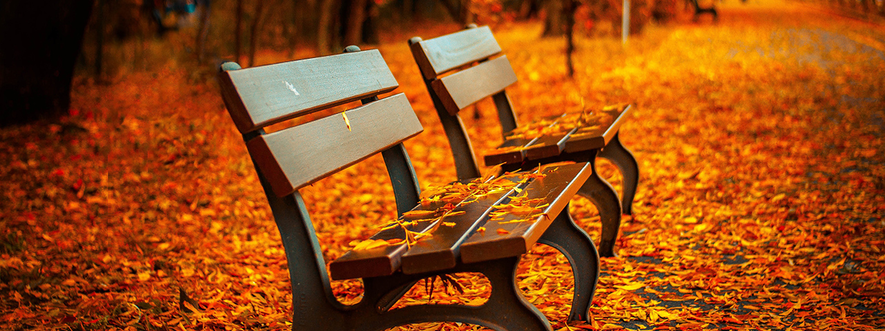 2-benches-fall-leaves