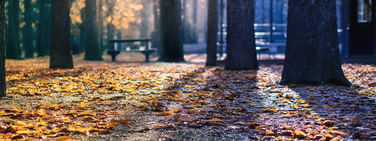 fall-park-leaves-woods