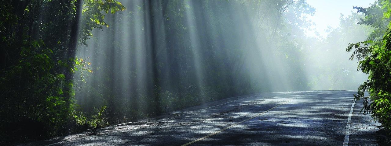 sun_through_the_trees-slide
